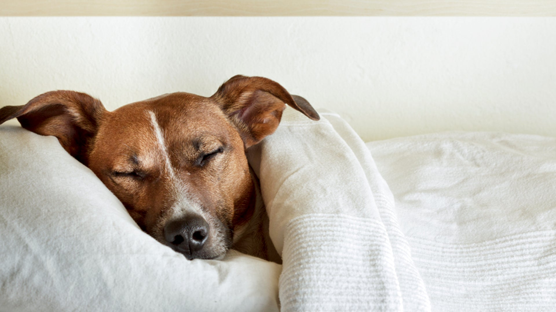 When You Dream About Dogs, What Are You Really Dreaming About?