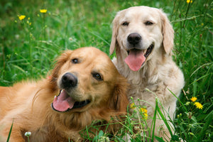 Why Are Dogs So Friendly? The Answer According to Science