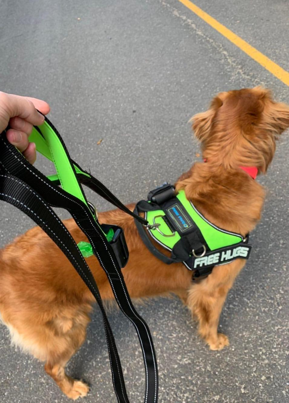 Features of the BEST Dog Leashes