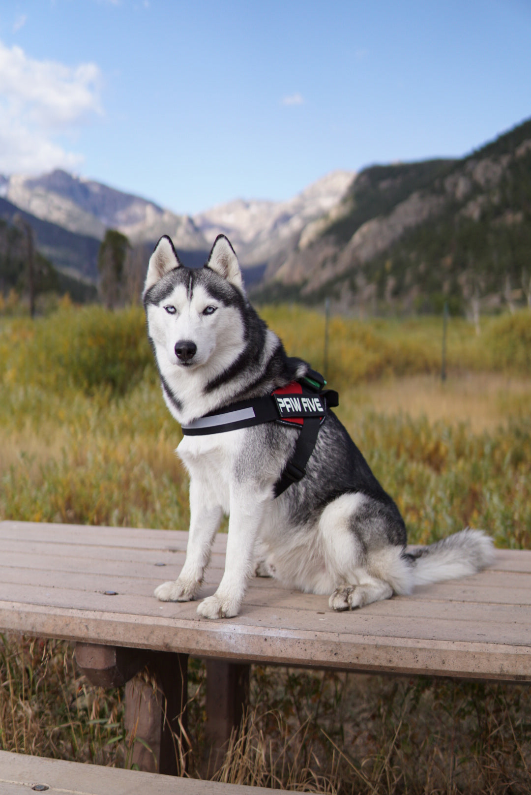 No Pull Dog Harness | Select the Best No Pull Harness For Your Dog