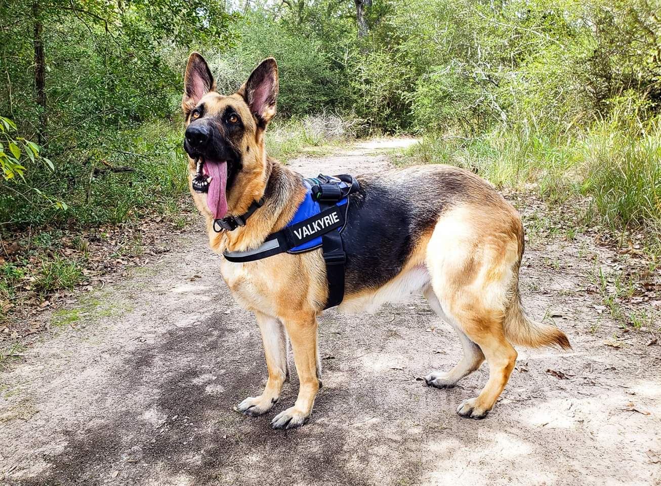 Easy Walk Harness | Paw Five CORE-1 No Pull Easy Walk Dog Harness