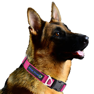 Training Dog Collar - Paw Five Orbit™ Collar