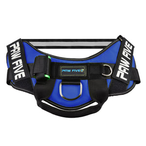 paw five core-1 harness sky blue angle 1