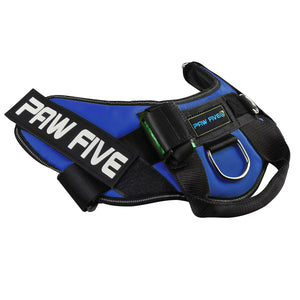 paw five core-1 harness sky blue angle 2