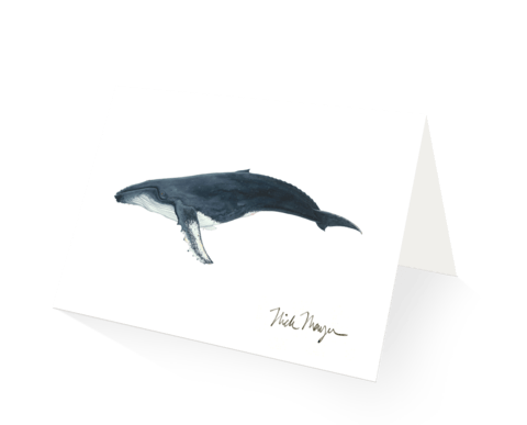 Nick Mayer Note Cards