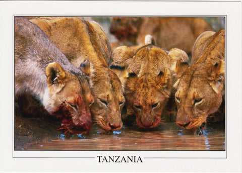 Postcards from Tanzania