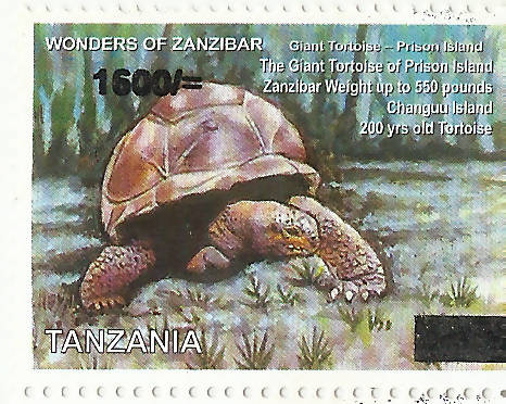 Wonders of Zanzibar (Giant Tortoise)