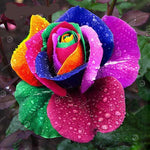 Rare Rose Seeds (100PCS) - whimsyandever