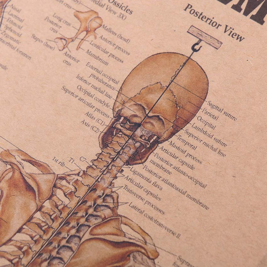 The Skeletal System Poster - whimsyandever