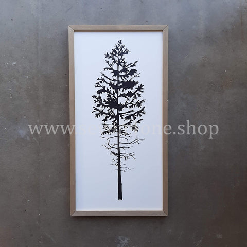EVERGREEN - GREENHORN - 12 X 24