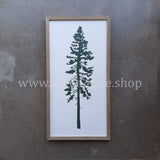EVERGREEN - QUARTZ VALLEY - 12 X 24