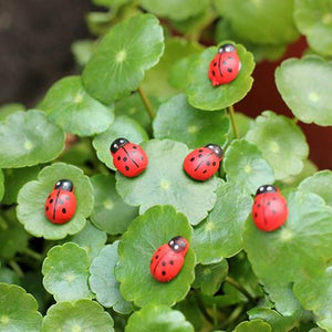 Garden Ornaments Cartoon Mini Ladybird