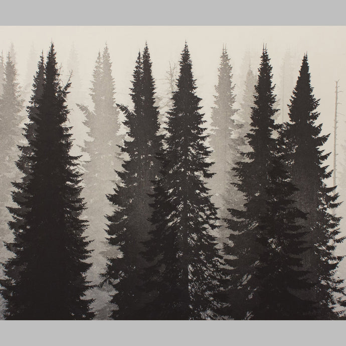 Untouched Forest 3