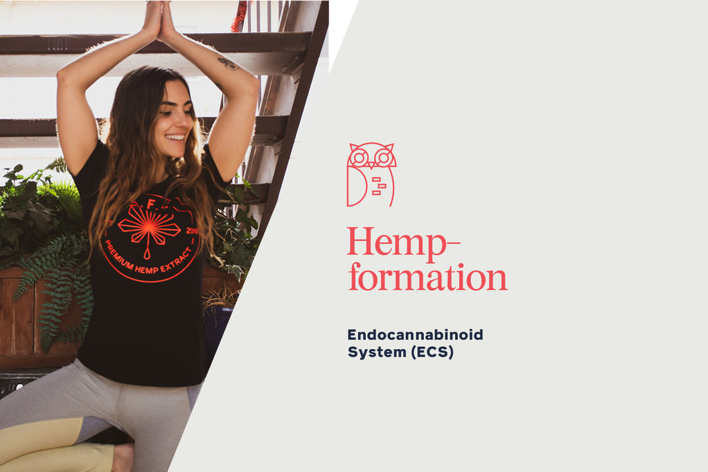 What is the Endocannabinoid System (ECS)?