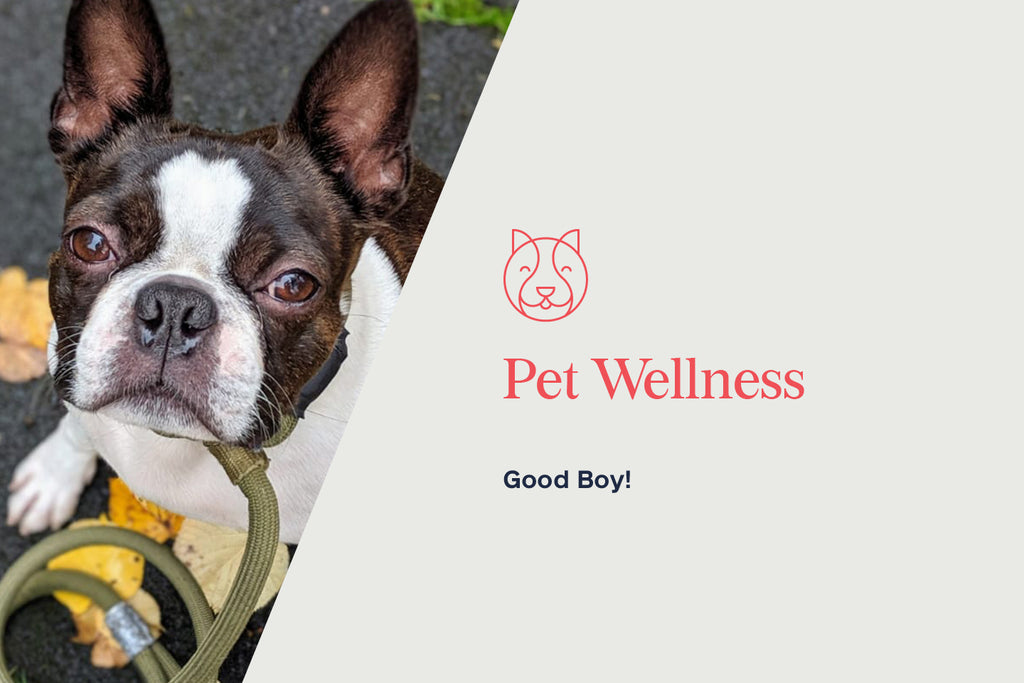 Holistic Pet: Is CBD Good for my dog, cat, or pet sea squirt?