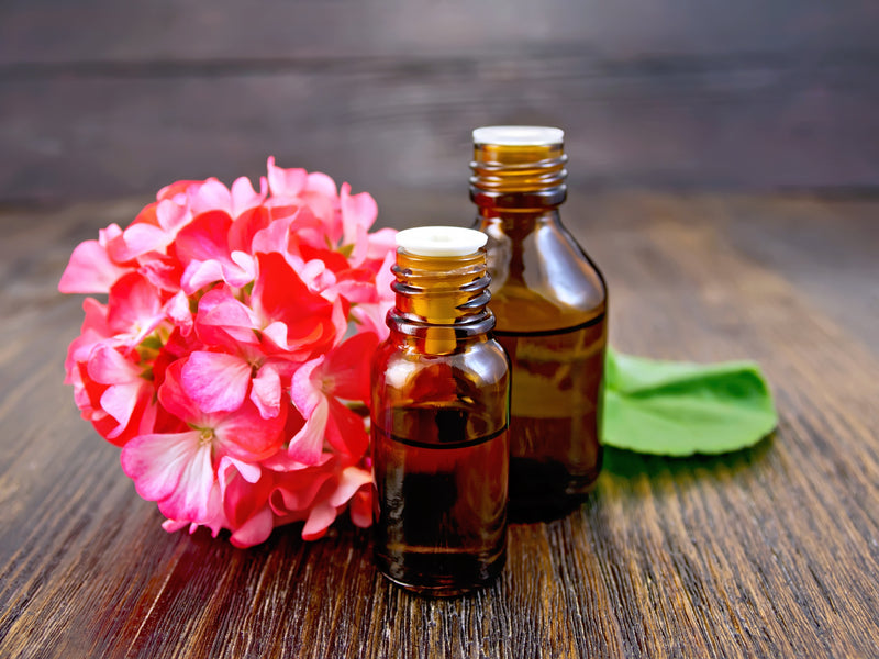 The Benefits of Geranium Essential Oil - An Ancient, Natural Remedy