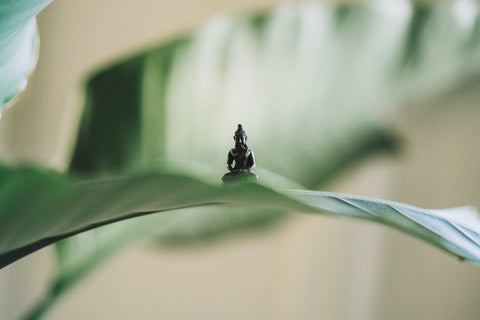 Being aware and in control of our bodies, thoughts, and feelings can sometimes feel unobtainable, but through the practice of meditation we can come to peace with our thoughts, reshaping our attitudes and perspectives.