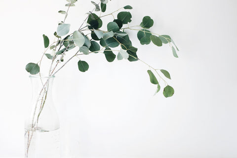 Eucalyptus essential oil may help clear sinus congestion and open airways in the nostrils and throat, acting as a snoring remedy for some individuals.