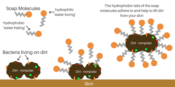 Soap Molecules how hand soap breaks in and destroys the virus