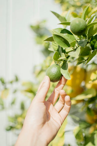 Lime oil has a variety of uses, from aromatherapy to treating skin ailments.