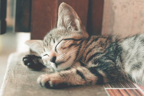 relaxed sleeping kitten representative of the health benefits of sleep for the mind and body