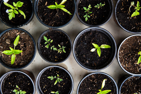 planting for sustainable products with sustainable raw materials