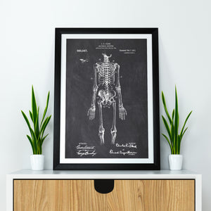 Anatomical Doctors Skeleton