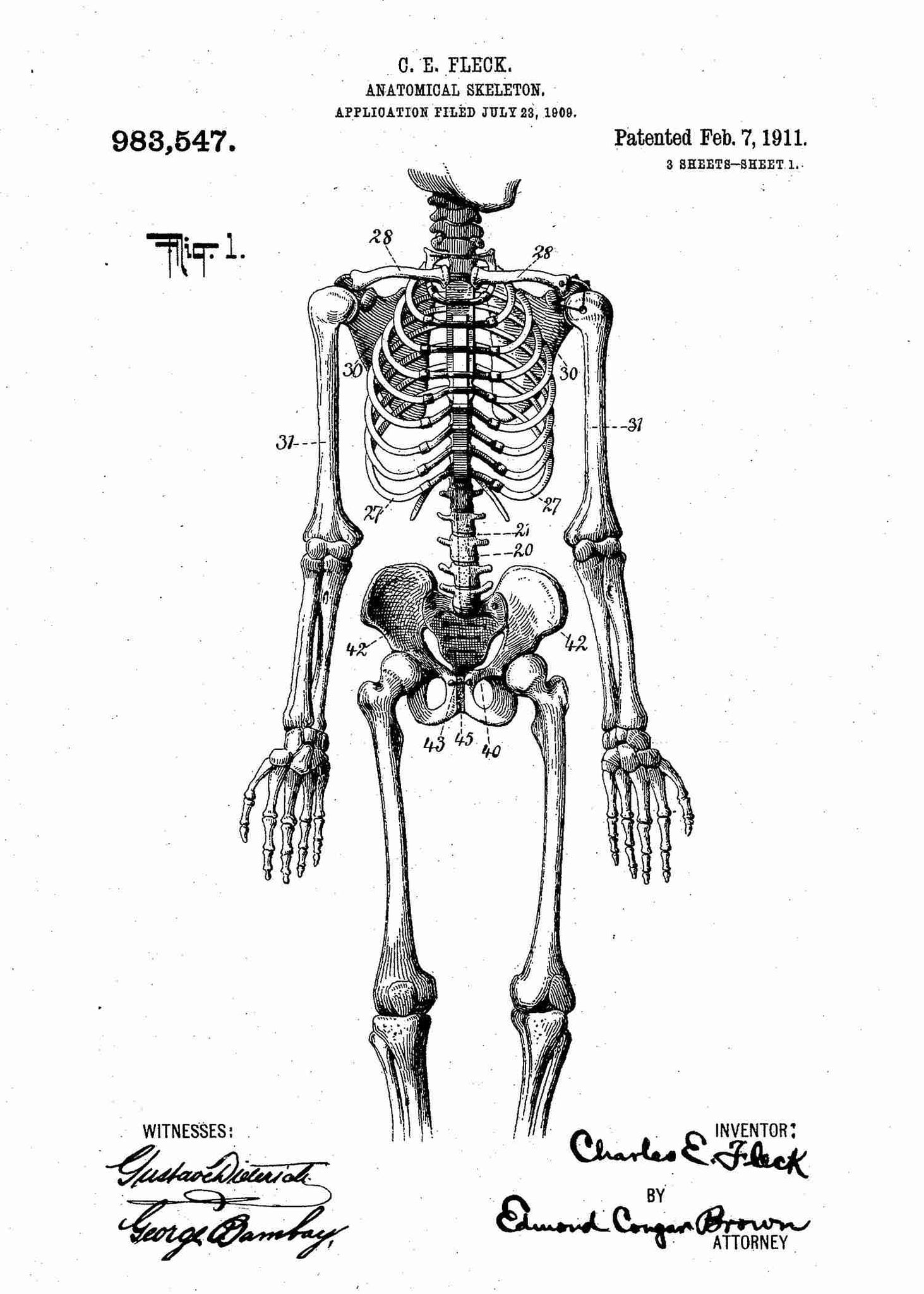 Human Anatomical Skeleton Patent Print Doctors Office | Patent Art