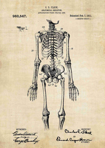 human anatomical anotomy skerleton patent print, doctors office poster decor of a skeleton in the style vintage