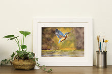 Kingfisher Prints