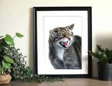 Face on - Wildcat Print