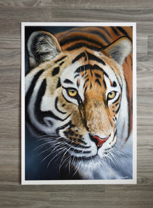 "Limited Edition ""Amur Tiger"" Print"