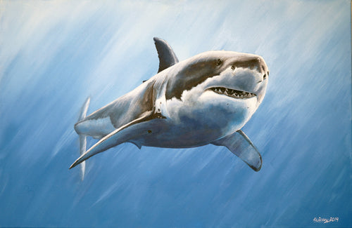Shark Original Artwork