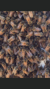 Honeybees bearding on beehive hivebody beekeeping picture