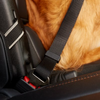 Quality Dog Seat Belt