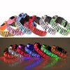 PREMIUM ZEBRA STRIPE GLOW-IN-THE-DARK LED SAFETY COLLAR