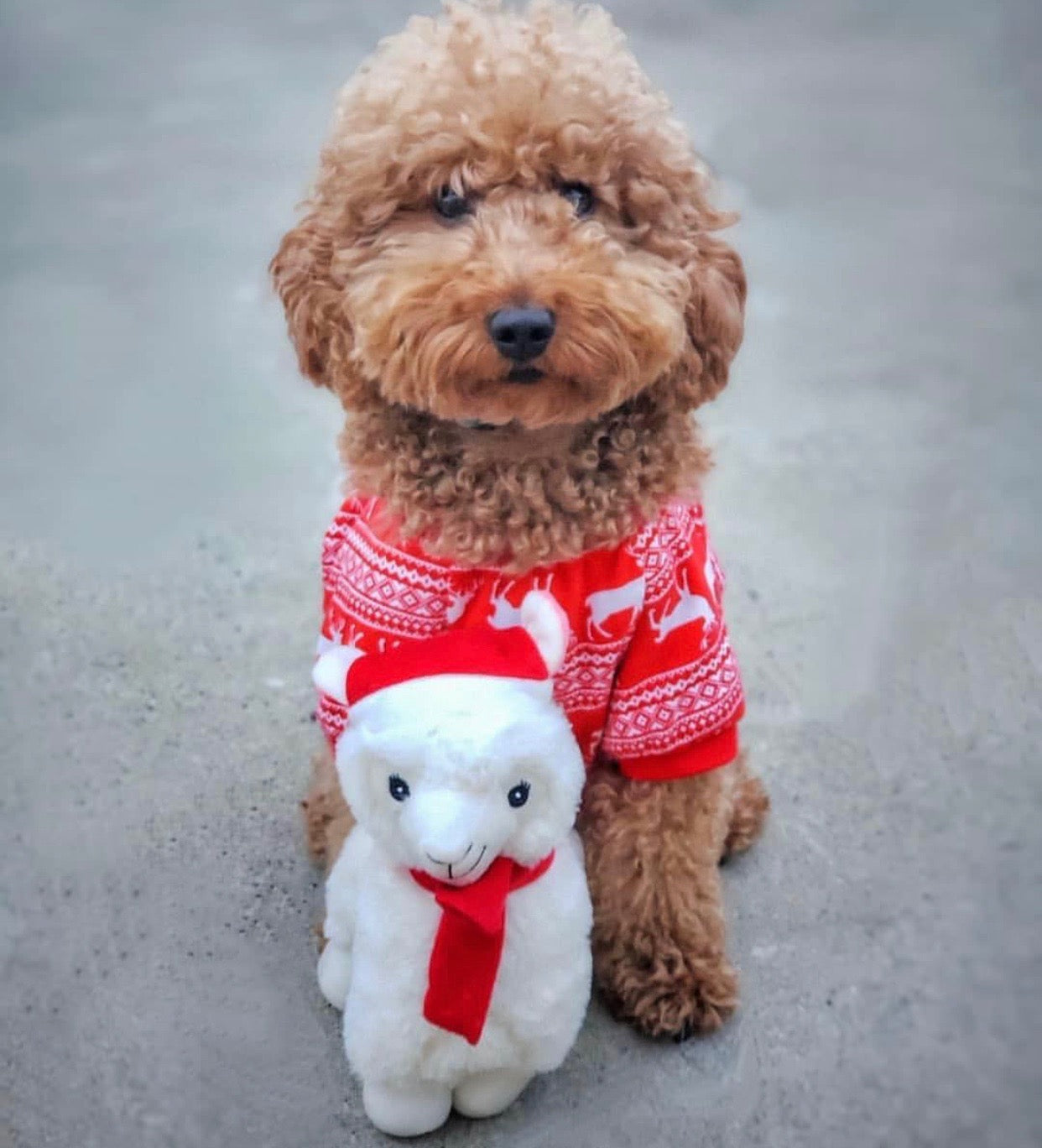 12 Days of Unique Dog Gifts for Pups and Humans | Blog | Gift Spawt