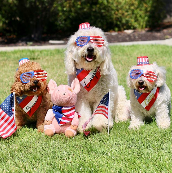 Pawty in the USA | Blog | Gift Spawt