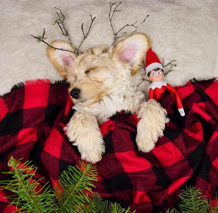 9 of the Most Festive Dogs on Instagram | Blog | Gift Spawt