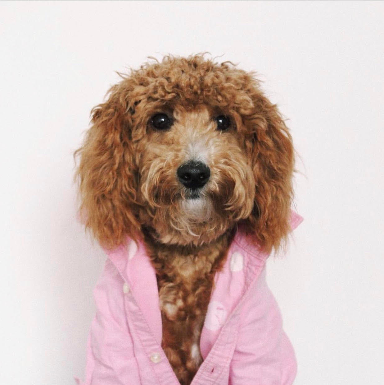 8 Instagram Dogs That Should Be the Bachelor | Blog | Gift Spawt