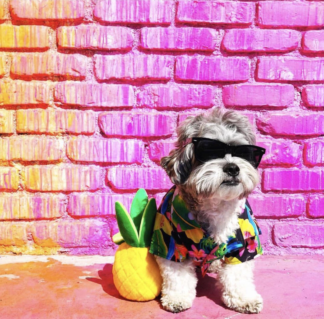9 of the Most Fashionable Dogs on Instagram