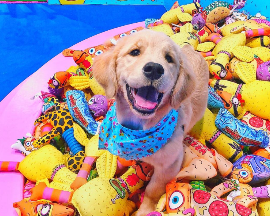 5 Reasons You and Your Pup NEED to Experience This Pop-Up