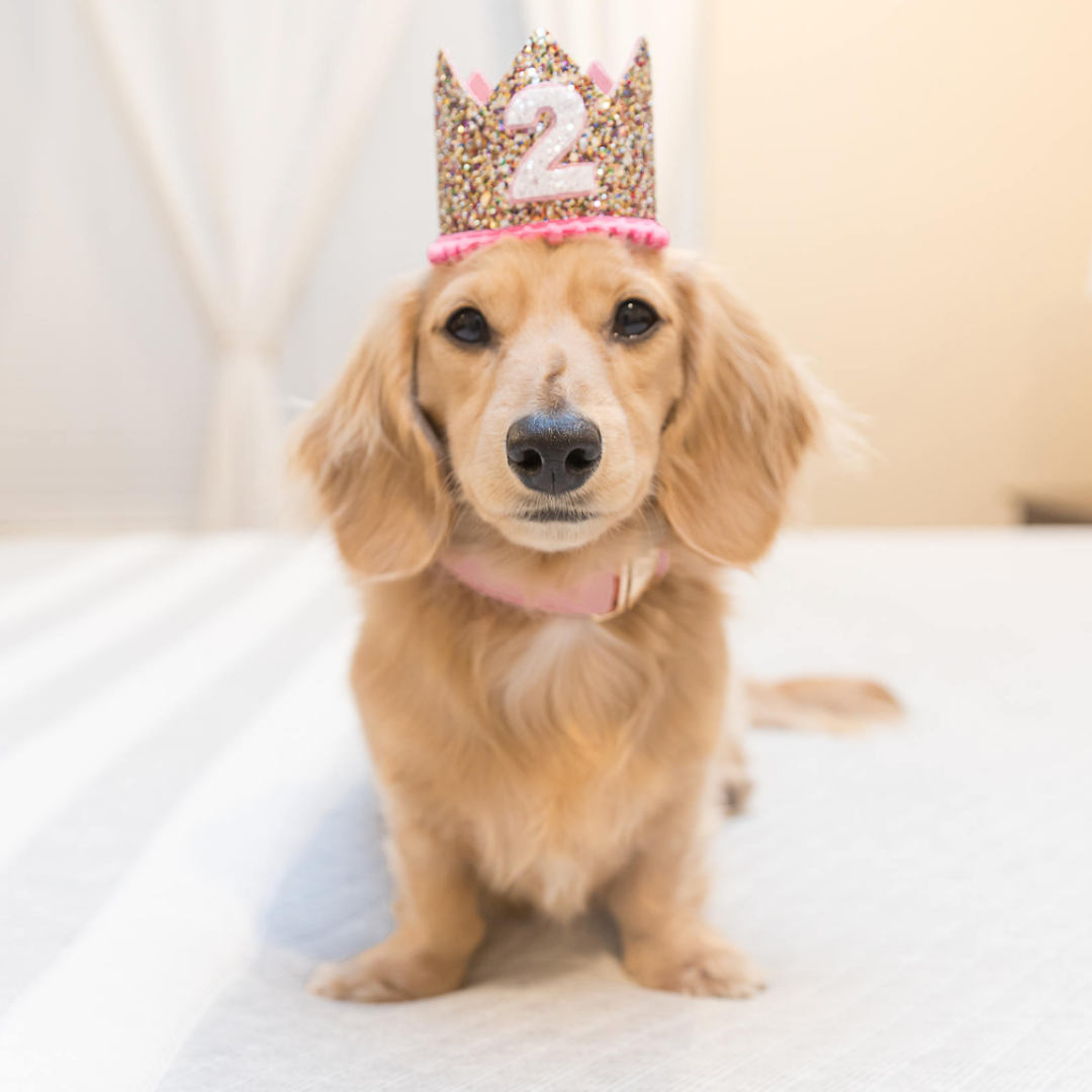 How To Throw The Best Dog Birthday Party Blog Gift Spawt