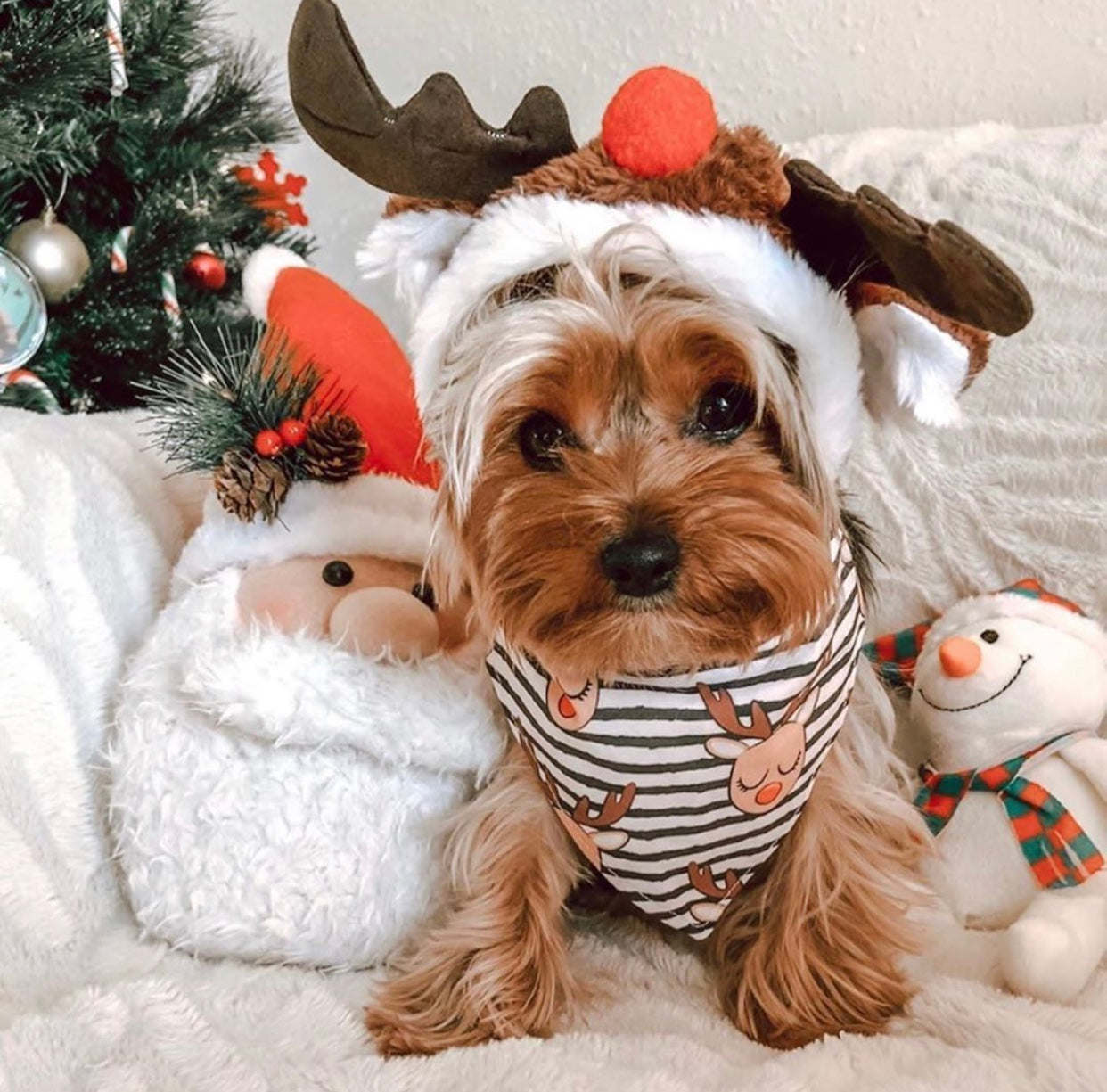 12 Dogs that are Holiday ready