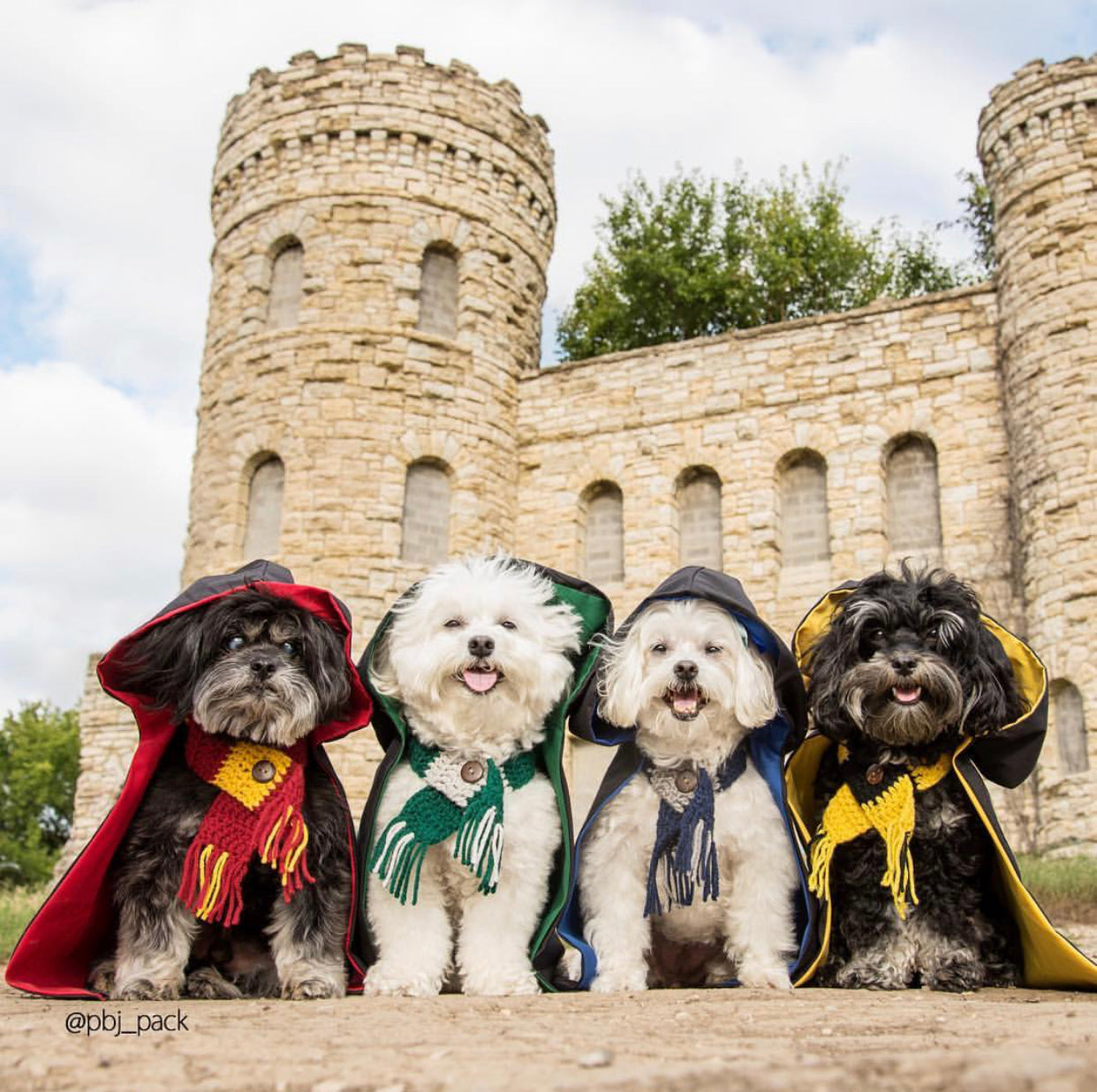 15 Dog Halloween Costumes that Are Scary Cute! | Blog | Gift Spawt