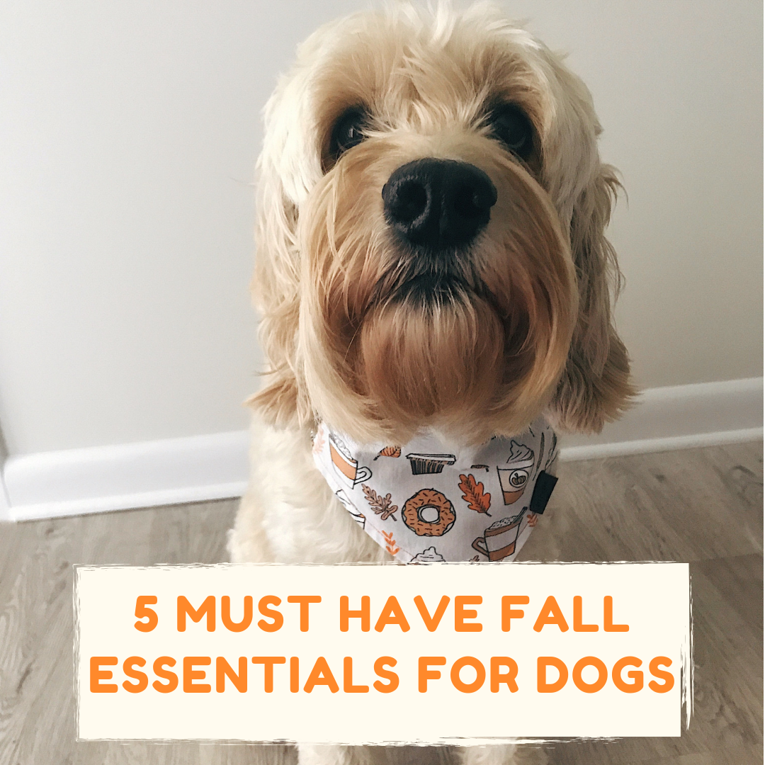 Fall and Dogs: 5 Must-Have Essentials | Blog | Gift Spawt