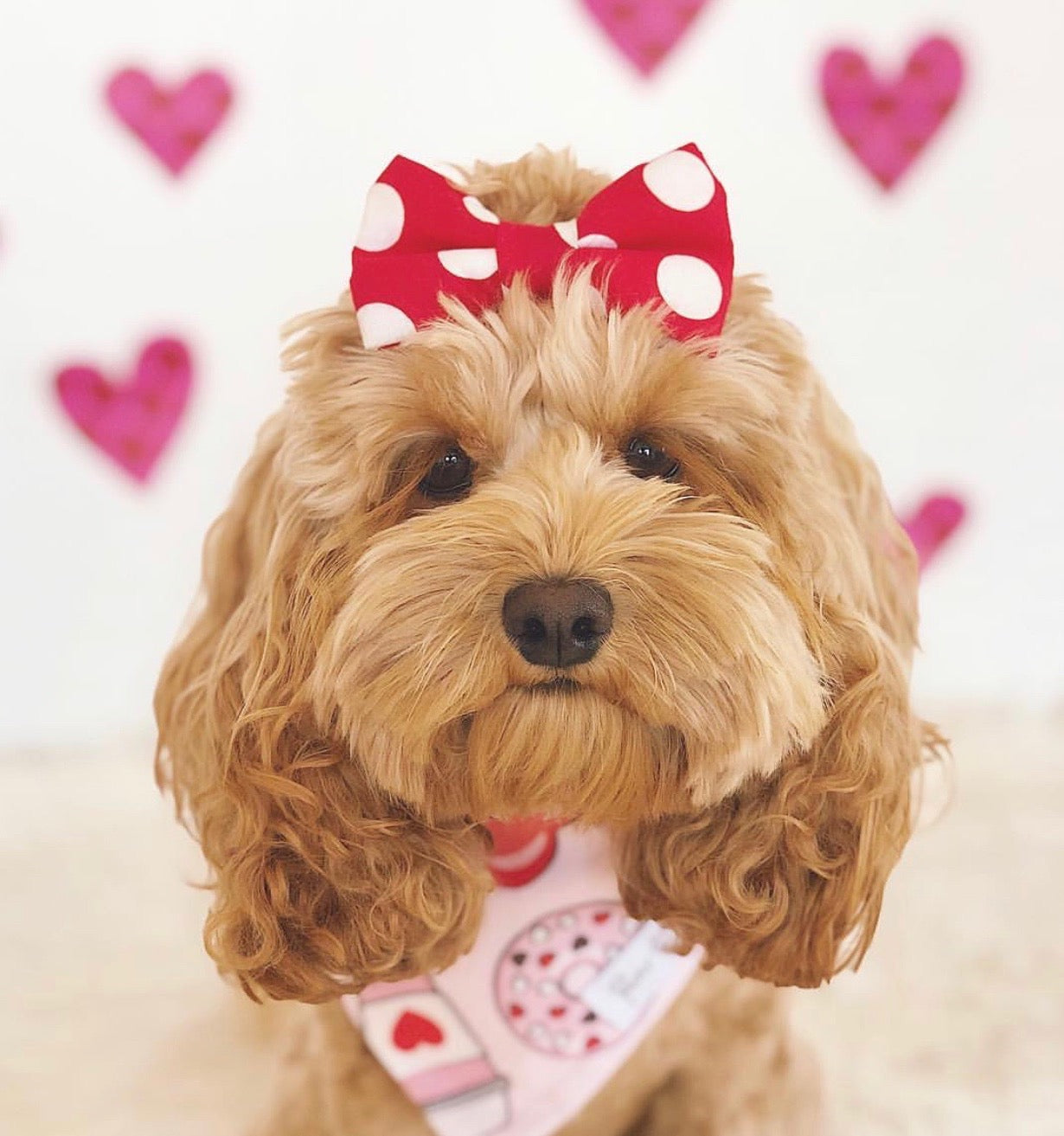 8 Instagram Dogs That Should Be the Bachelorette | Blog | Gift Spawt
