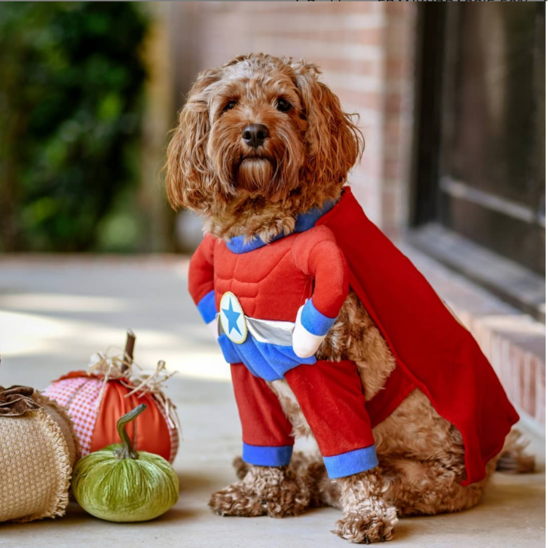 Everything You Need to Know Before Your Dog's First Halloween | Blog | Gift Spawt