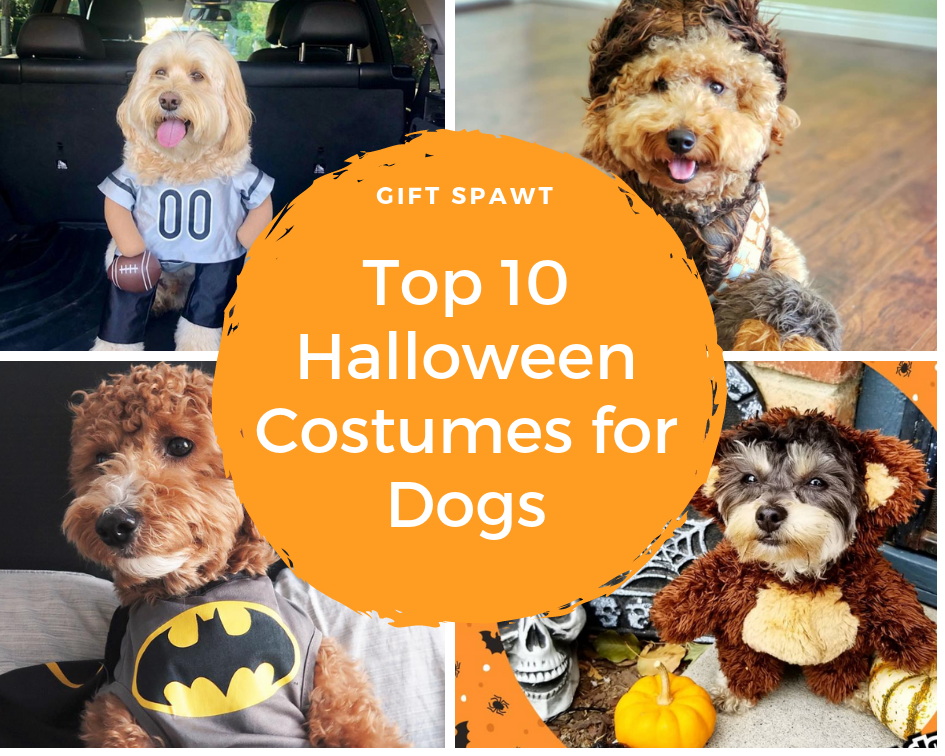 Top 10 Halloween Costumes for Dogs | Blog | Gift Spawt