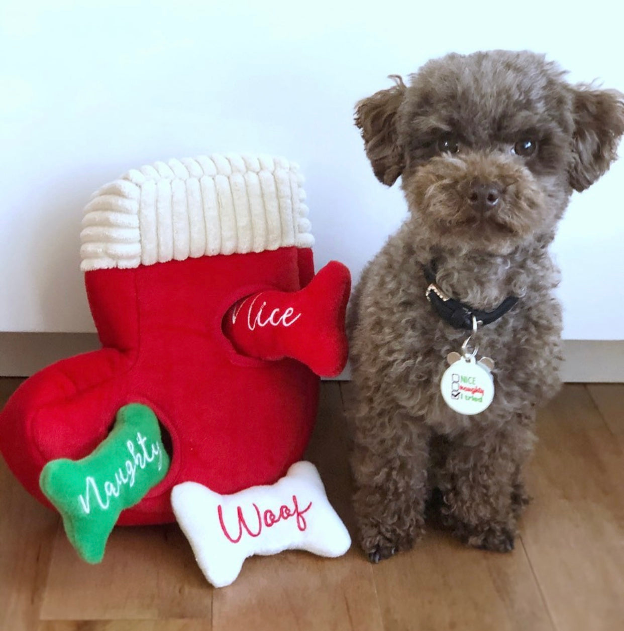 12 Dogs That Are Ready for the Holidays | Blog | Gift Spawt